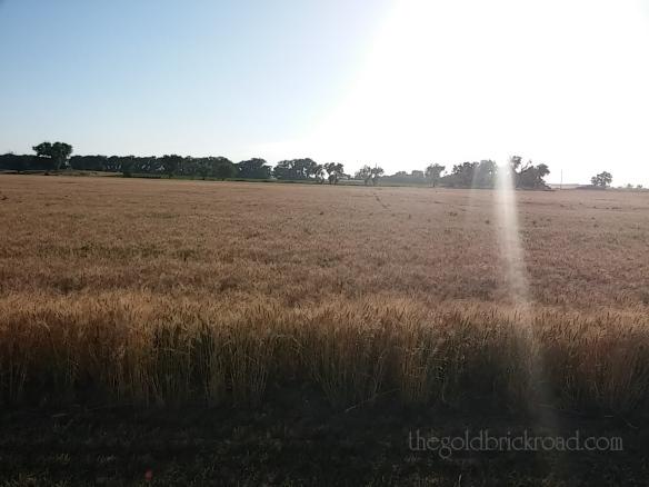 Harvest // thegoldbrickroad.com