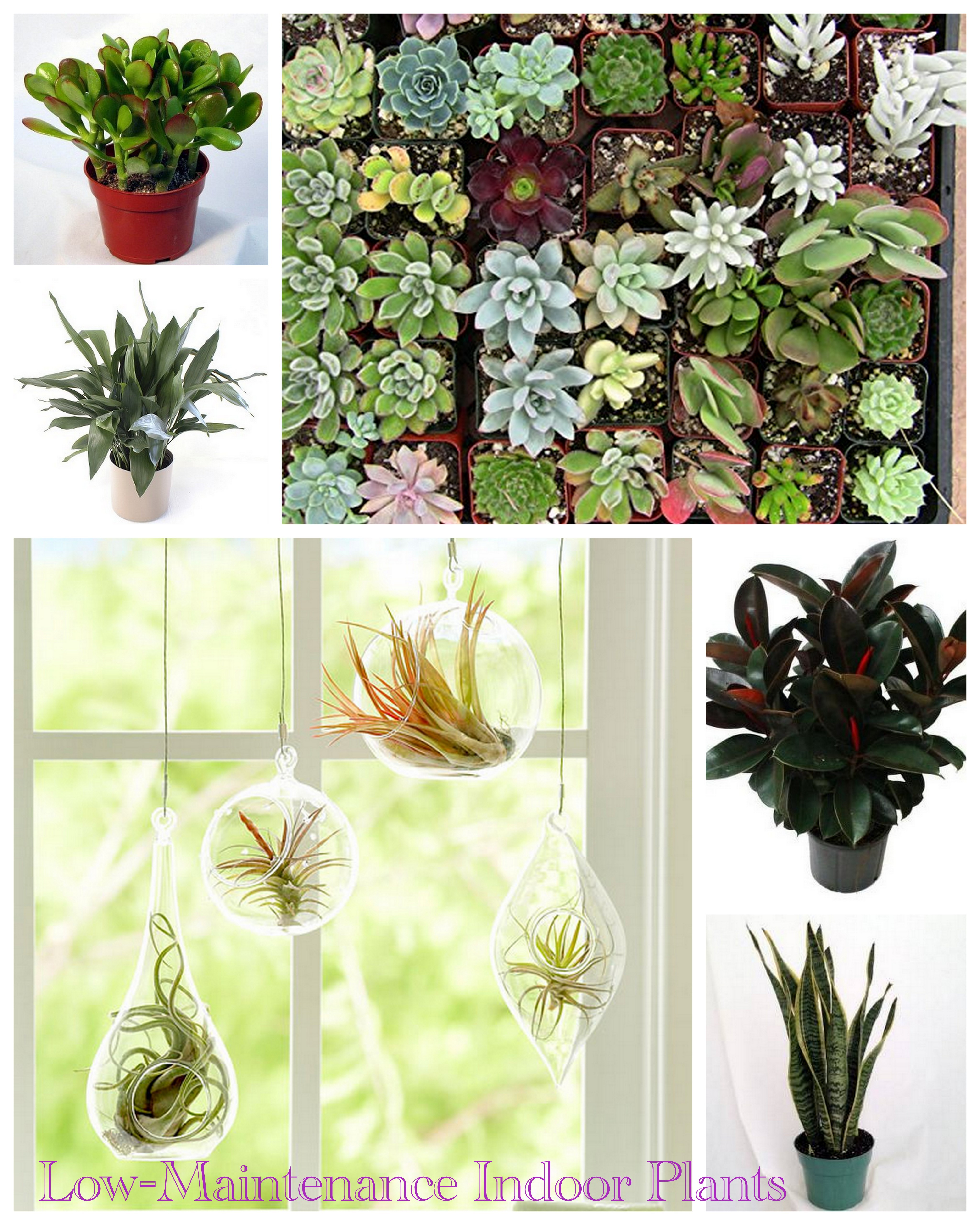 Clockwise: Jade Plant // Succulents // Rubber Plant // Snake Plant // Air  Plants // Iron Plant